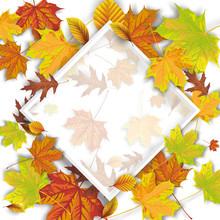 Autumn Foliage Frame Rhombus