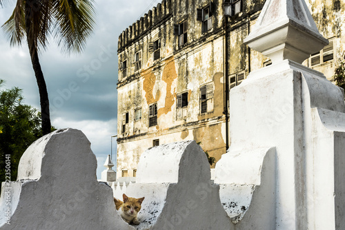 Foto auf Leinwand Sansibar Wild Cat chilling out in Stone Town, Zanzibar. Historical buildings can be seen in the back ground. Zanzibar is an island off of the coast of Tanzania, East Africa.