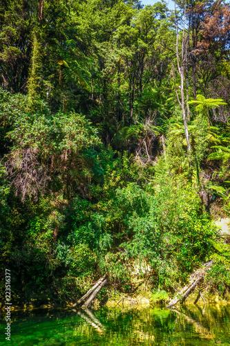 Tuinposter Oceanië River in Abel Tasman National Park, New Zealand