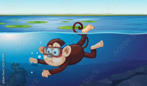 Keuken foto achterwand Kids A monkey diving in the pond
