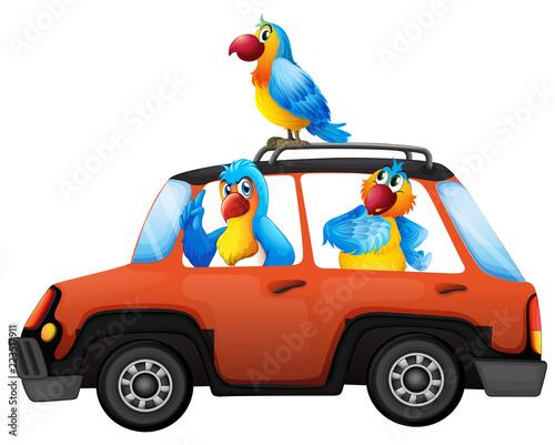 Keuken foto achterwand Kids Parrot travel by car