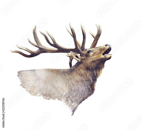 Bull Elk watercolor Wall mural