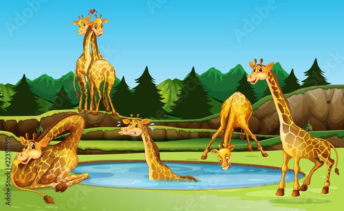 Keuken foto achterwand Kids Giraffe in the nature