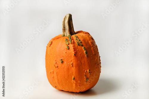 Hokkaidokurbis Kurbis Halloween Ernte Herbst Lekcer Speisekrurbis