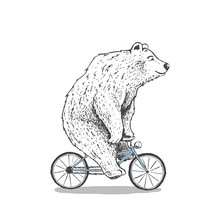 Polar Bear Is Riding A Bicycle...