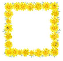 Framework Of Yellow Daisies. Watercolor Hand Drawn Illustration