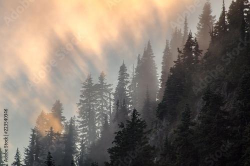 drzewa-iglaste-we-mgle-i-wieczornych-promieniach-slonca