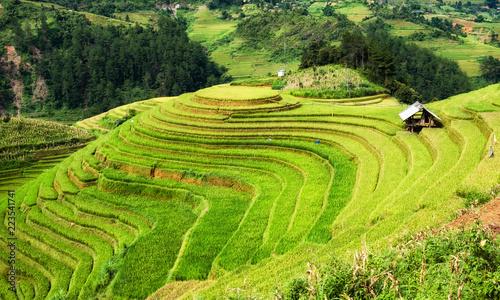 Poster Rijstvelden Viewpoint of rice field on terraced landmark of Mu Cang Chai