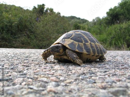 Foto op Aluminium Schildpad Turtle - Corsica - France