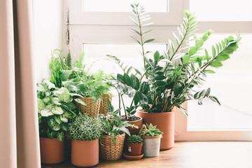 Green flowers in the pots on window