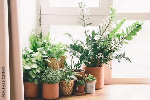 Zielone kwiaty w doniczkach na oknie