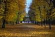 落葉のシェーンブルン