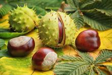 Horse Chestnuts On Autumn Foliage