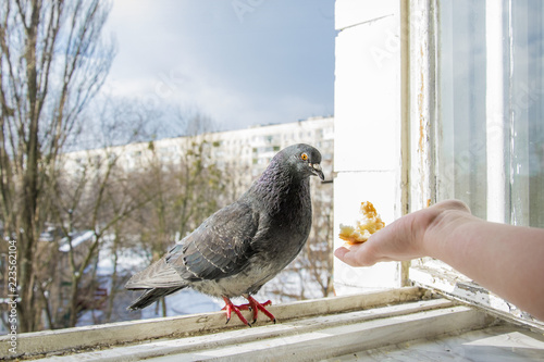 In winter, you can feed bread from the pigeon's hand from the balcony.