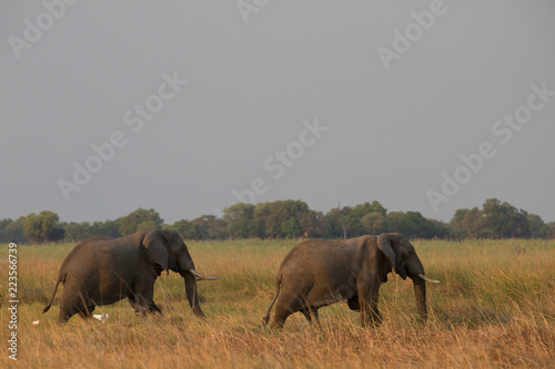 Foto op Aluminium Olifant elephant in africa in a group