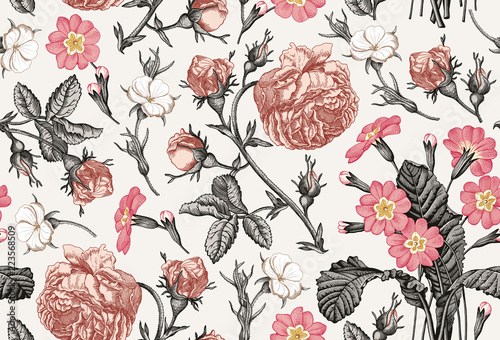 wzor-piekne-rozowe-kwitnace-realistyczne-pojedyncze-kwiaty-tlo-kwiaty-primula-rose-pierwiosnka-tapetowy-barokowy-bukiet-rysunek