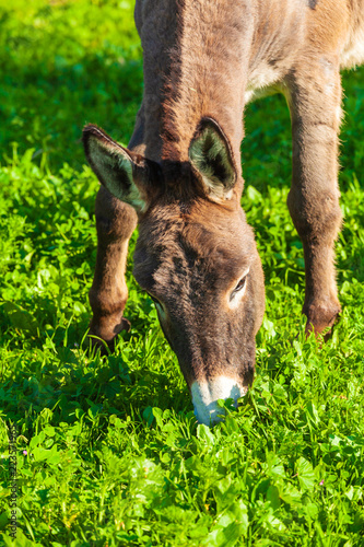Cute Donkey Eating Green Grass near Lake