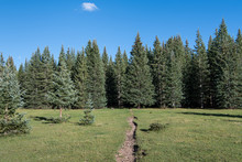 Hiking Trail Crossing A Beautiful Grassy Alpine Meadow Towards A Forest Of Spruce And Fir Trees - Winsor Trail In The Puerto Nambe Meadow Of The Pecos Wilderness Above Santa Fe, New Mexico