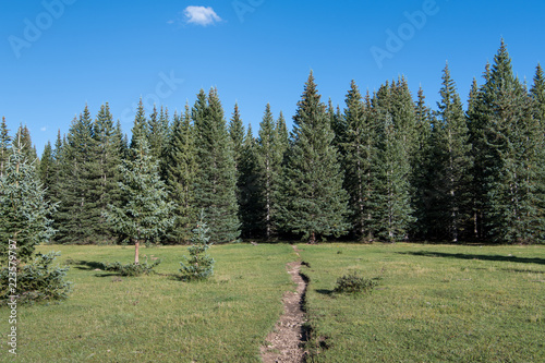 Photo  Hiking trail crossing a beautiful grassy alpine meadow towards a forest of spruc