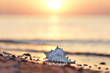 canvas print picture - Muschel am Strand - romantisch