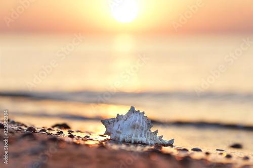 Fototapeta Muschel am Strand - romantisch obraz
