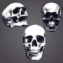 Set Of Three Hand Drawn Old Skulls.Grunge Style. Vector Grayscale Objects Isolated On Transparent Background.