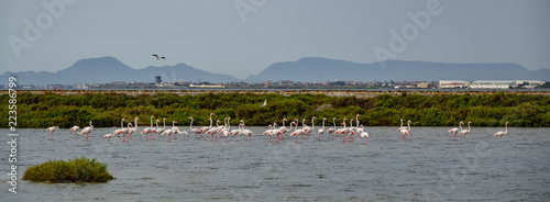 Panoramic view of group of flamingos against the city