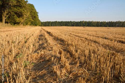 Fotobehang Cultuur wheat straw field
