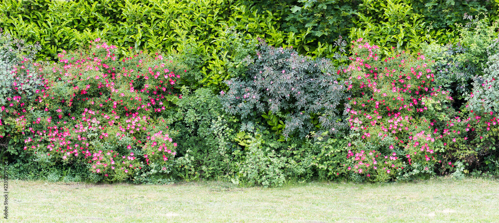 Fototapety, obrazy: Green  hedge with blooming bushes Seamless endless pattern