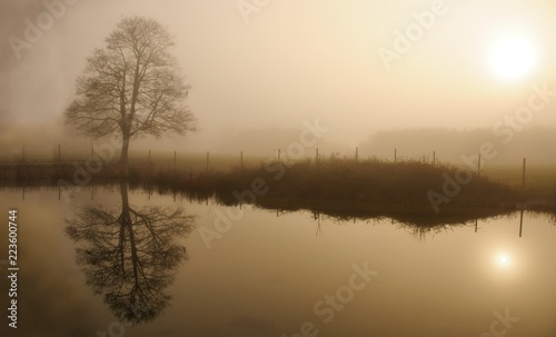 Foggy winter day in a park with lone tree reflecting in a water #223600744