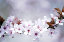 Close-up Of Blossoms Blooming ...