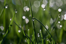 High Angle View Of Water Drops On Grasses During Sunny Day