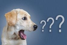 Dog Surprised On Blue Background, Question Mark