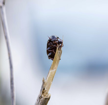 Close-up Of Insect On Plant Stem