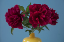Close-up Of Flowers In Vase Ag...
