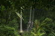 Scenic view of waterfall amidst trees in forest at Indonesia