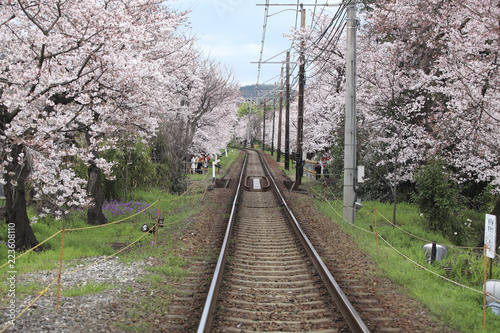 Railroad track amidst blooming cherry trees