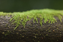Close-up Of Moss Growing On Tr...