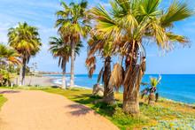 Coastal Path With Palm Trees A...