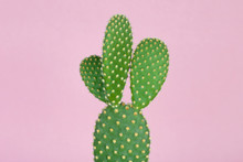 Green Cactus With Yellow Polka Dot Pattern On Pastel Pink Background