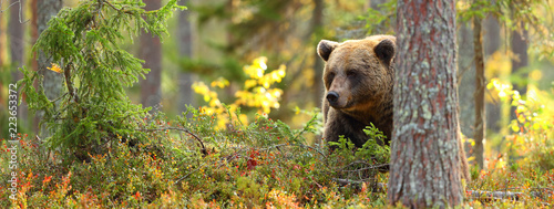 Fotomural  Brown bear head in a forest