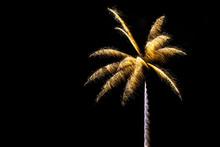 Sparkle Fireworks In Night Sky