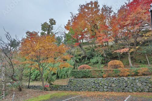 Keuken foto achterwand Begraafplaats Autumn scene. Fall at Saga toriimoto Preserved