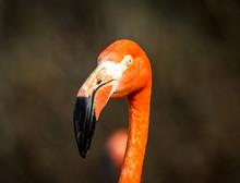 Orange Bird Flamingo