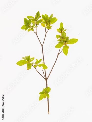 Fotografie, Obraz  leaves, plants, and grasses on the white background