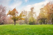 Oak Tree On The Grassy Park Me...