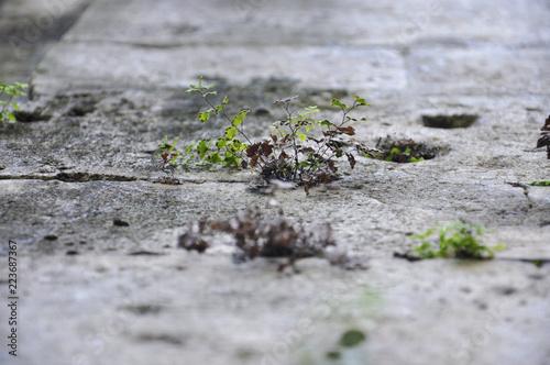 Tuinposter Bloemen Çiçekli Duvar