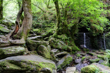 A Moss Covered Rocky Waterfall In The Luxuriant Thick Fragas Del Eume Forest, Together With Trees With Roots In The Stones Next To The Eume River, In Galicia, Spain