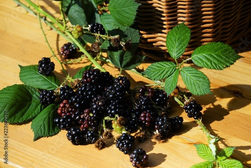 Blackberries on a wooden table Slika na platnu