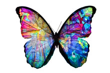 Multicolored Butterfly Isolate...